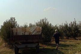 Dva hektara,Stari Slankamen, Inđija, Arazi